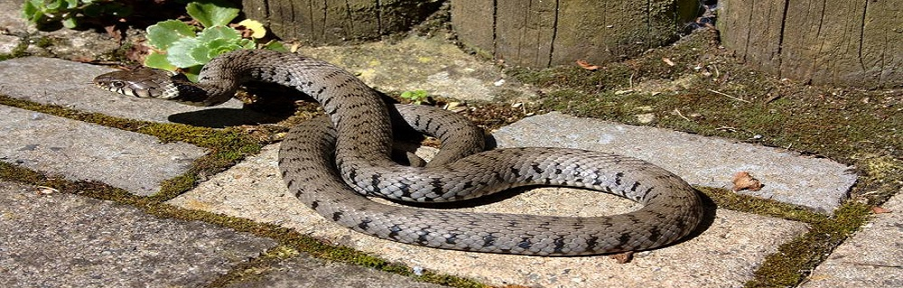 Отпугивание змей от ПроКомфорт